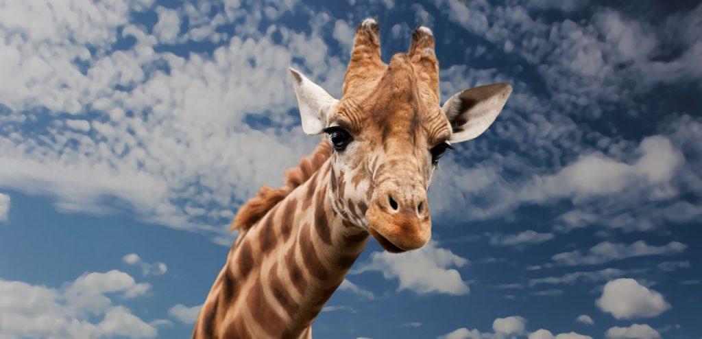 giraffe high frequency hearing loss types of hearing loss